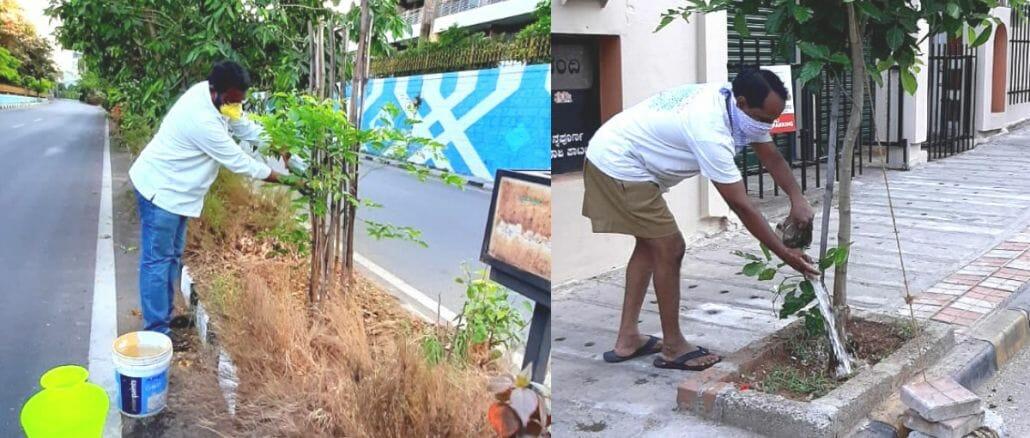 Volunteers, Kishore and Aravind, water the plants in Vasanth Nagar every alternate day in the evenings. Pic: Rajkumar Dugar