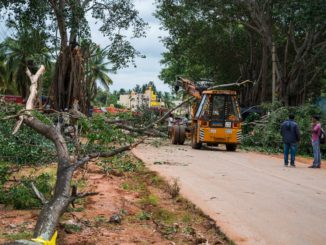 KRDCL road widening tree felling