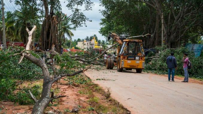 KRDCL road widening tree felling