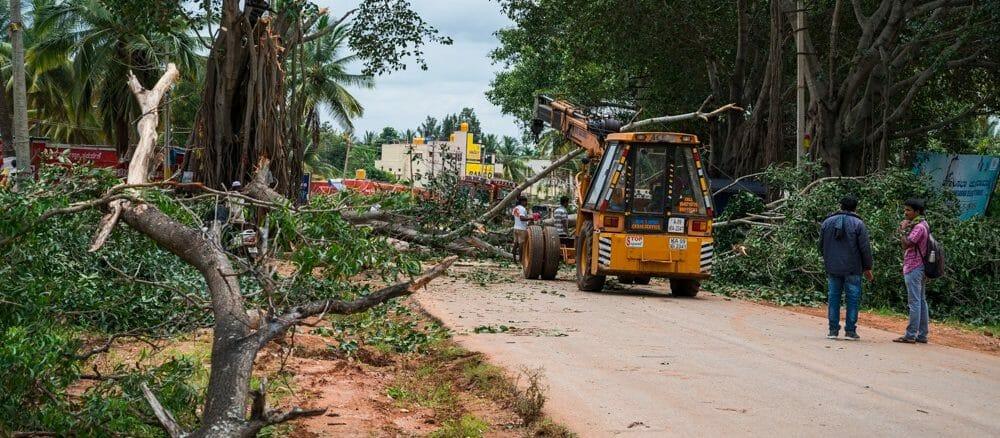 Tree felling in progress on Neelamangala-Doddaballpura road for road widening. Pic: Mahesh Bhat