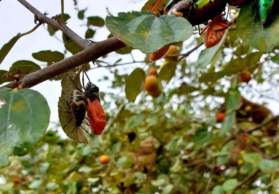 transplant trees species that support biodiversity