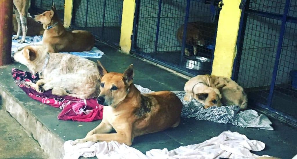 Dogs at rescue shelter