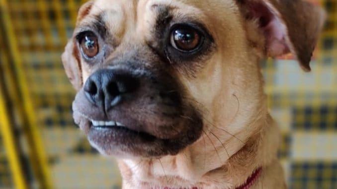 Abandoned dog during lockdown