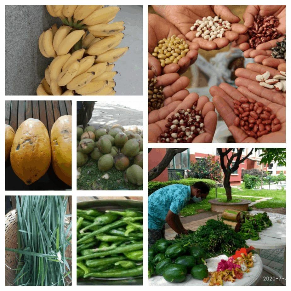 Harvest from the garden