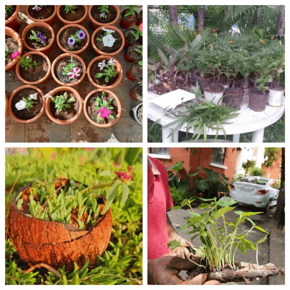 Nursery and seed bank