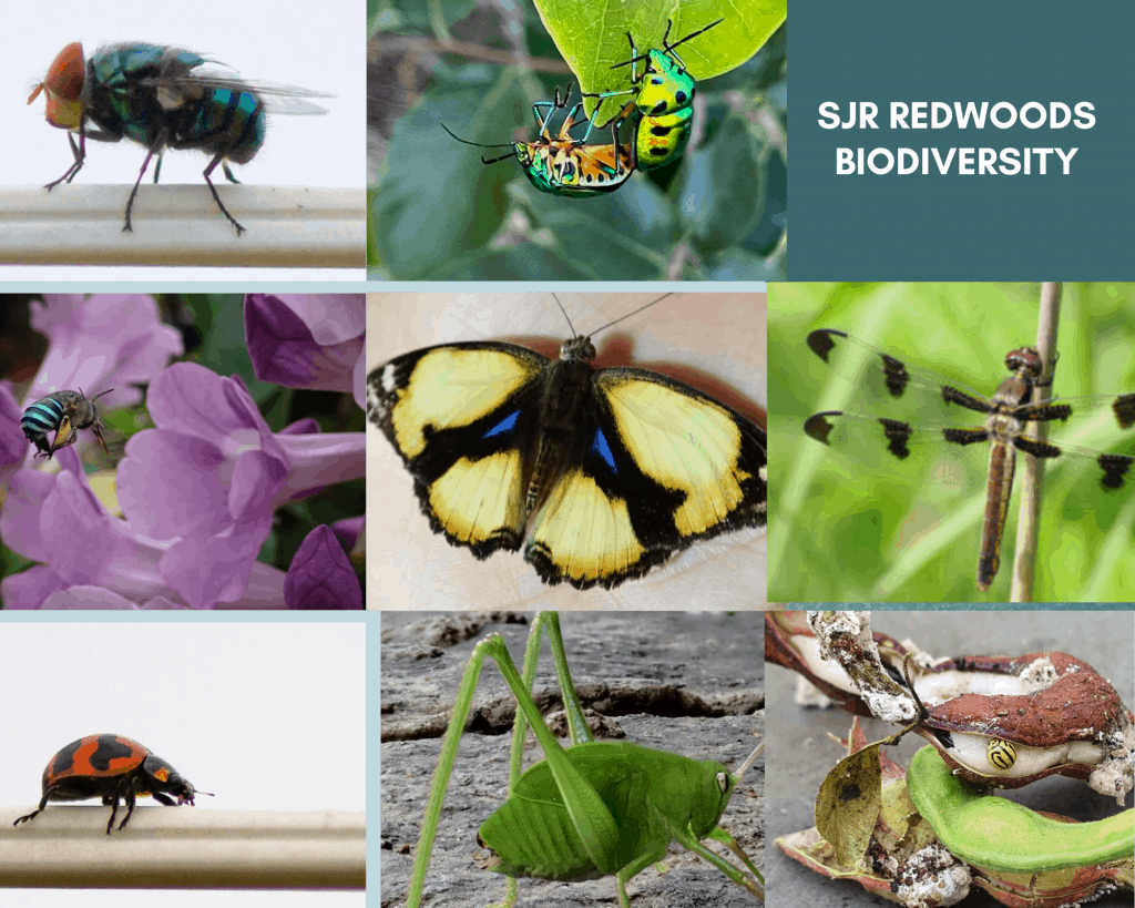 Beneficial insects which keep pests at bay