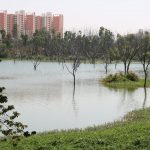 Kere Habba 2020: Celebrating Kaikondrahalli lake and its ecology