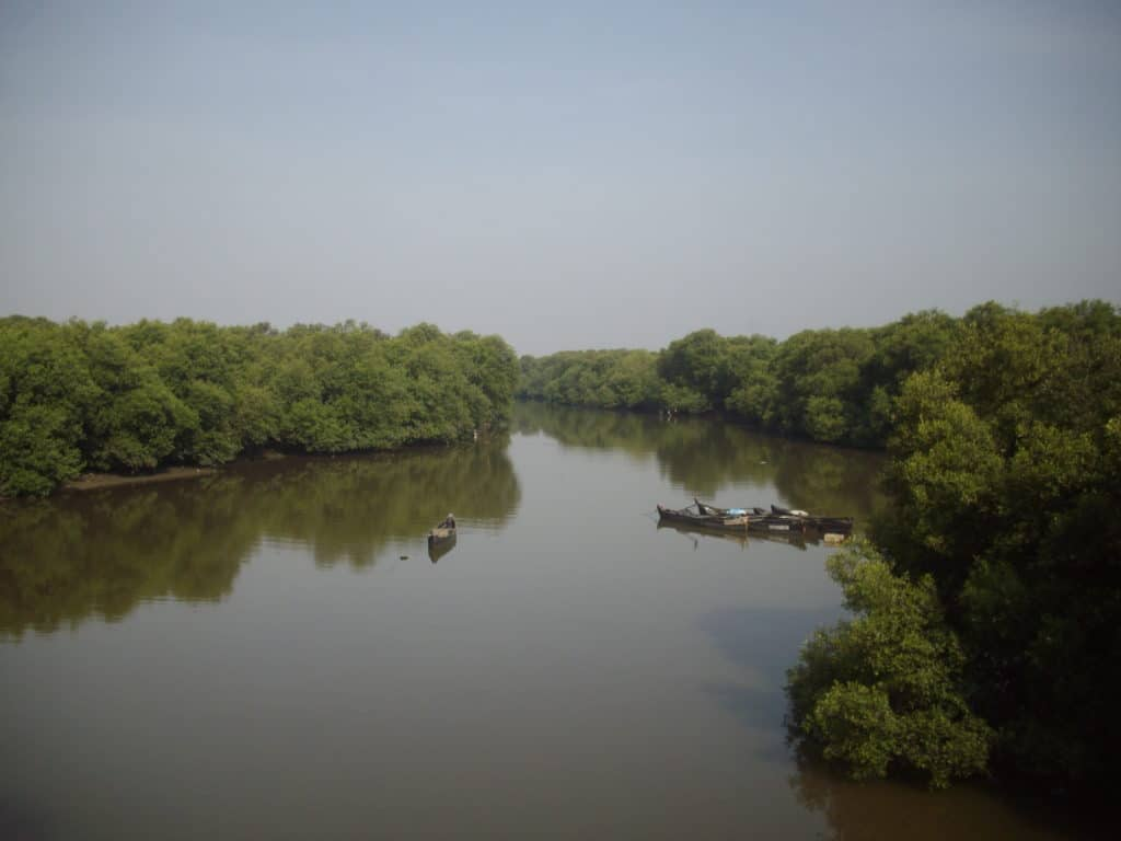 Vashi Creek and the Mangrove forests
