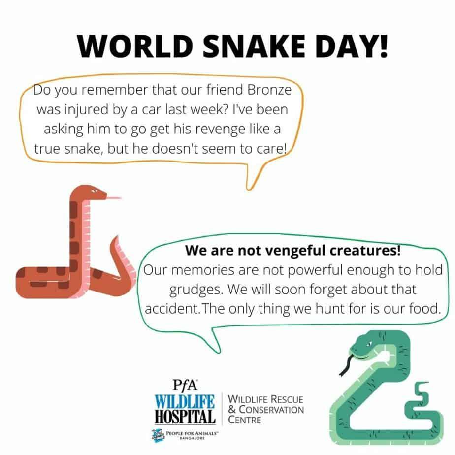 Snake myths poster  1