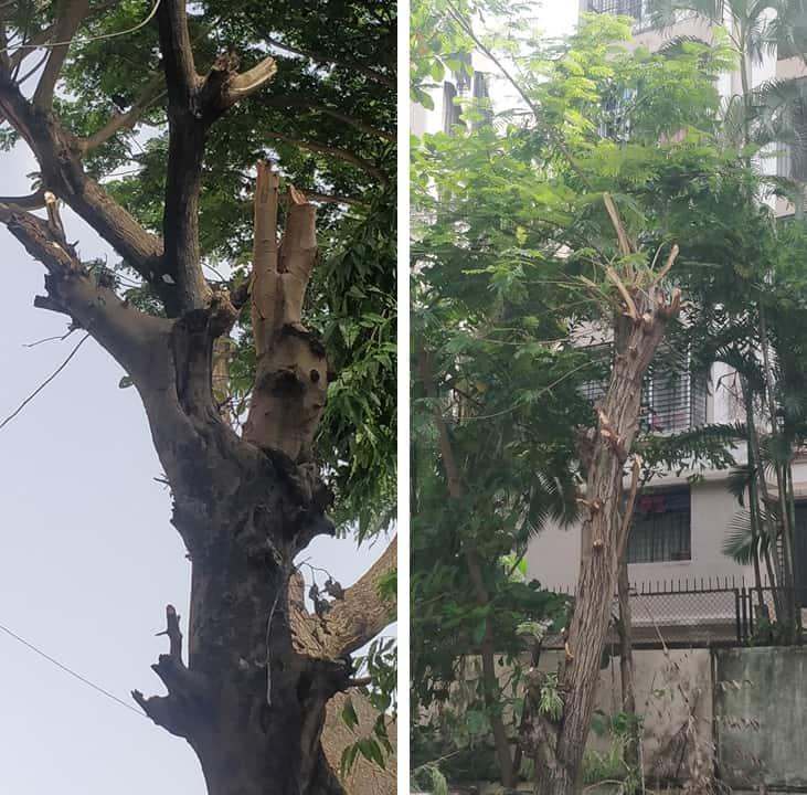 Poorly cut trees