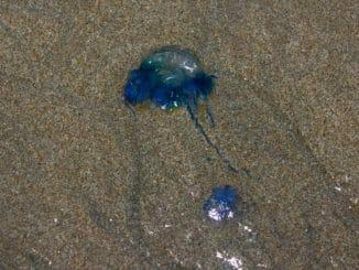 Blue bottle Juhu beach