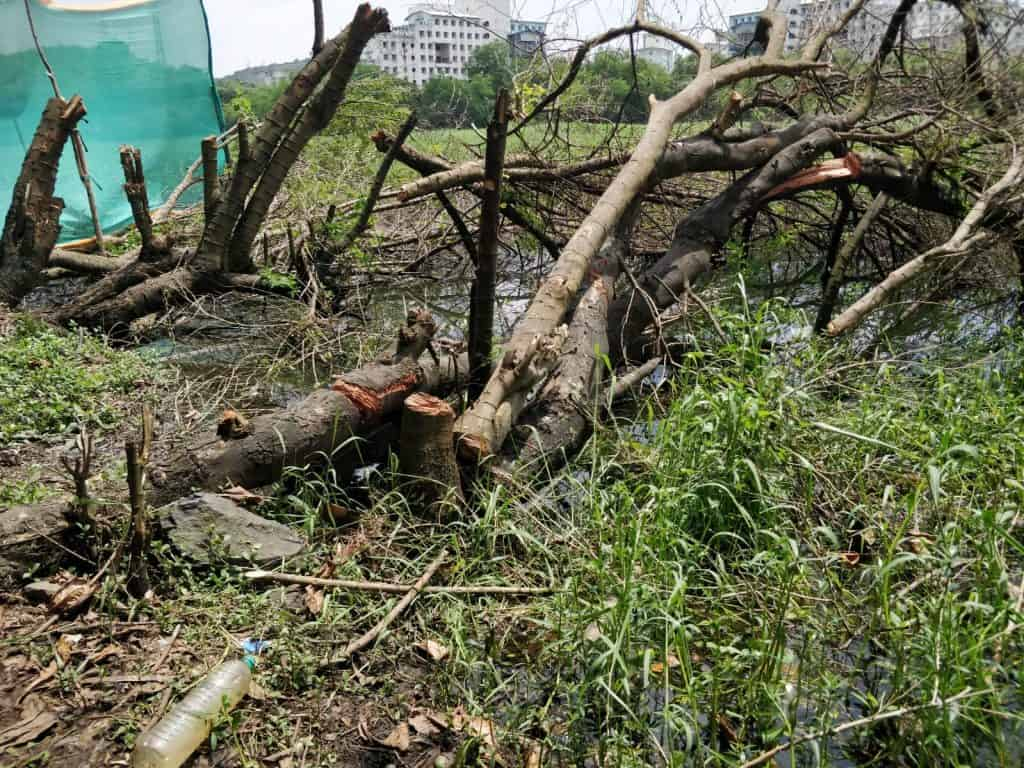 trees cut for concreting work for a cycling track besides the Powai Lake