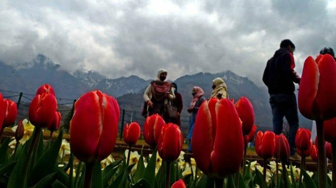 Srinagar Kashmir tulip garden