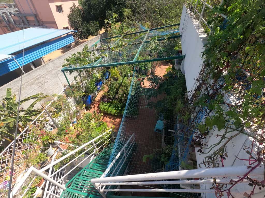 Urban agriculture during lockdown in Bengaluru