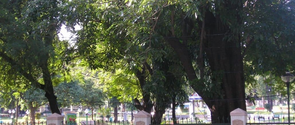 tree survey can help prevent loss of more trees in chennai