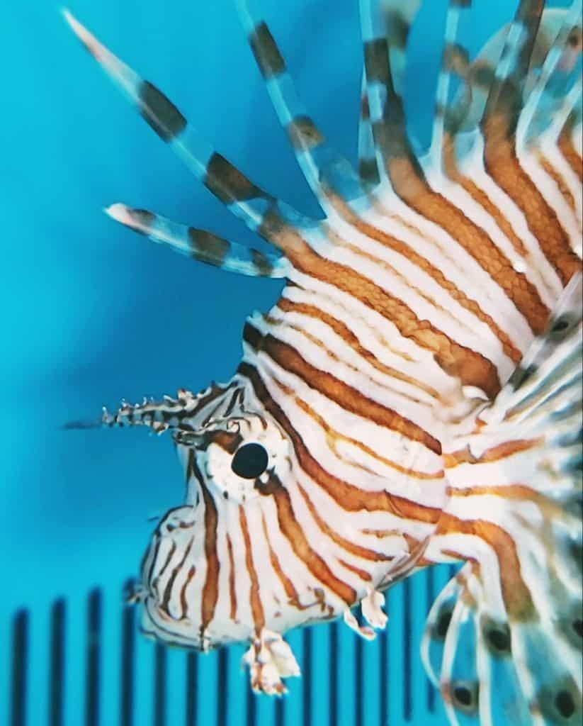 Marine fish varieties