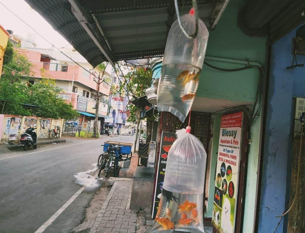 kolathur fish market