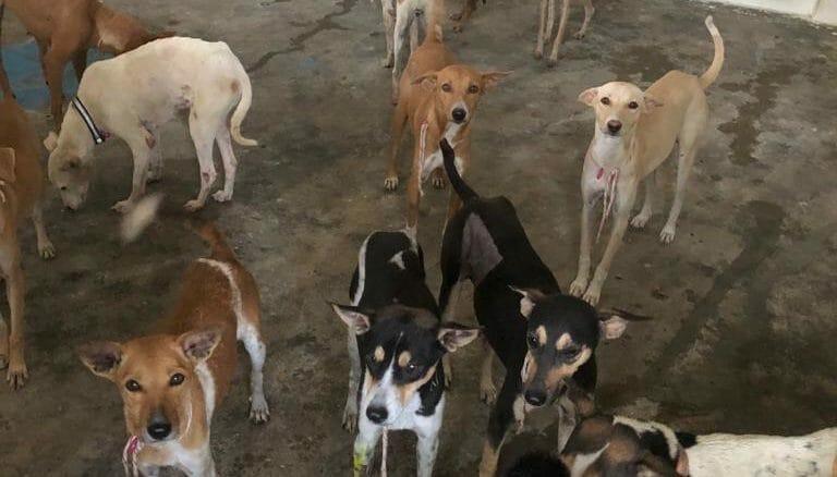chennai stray dogs