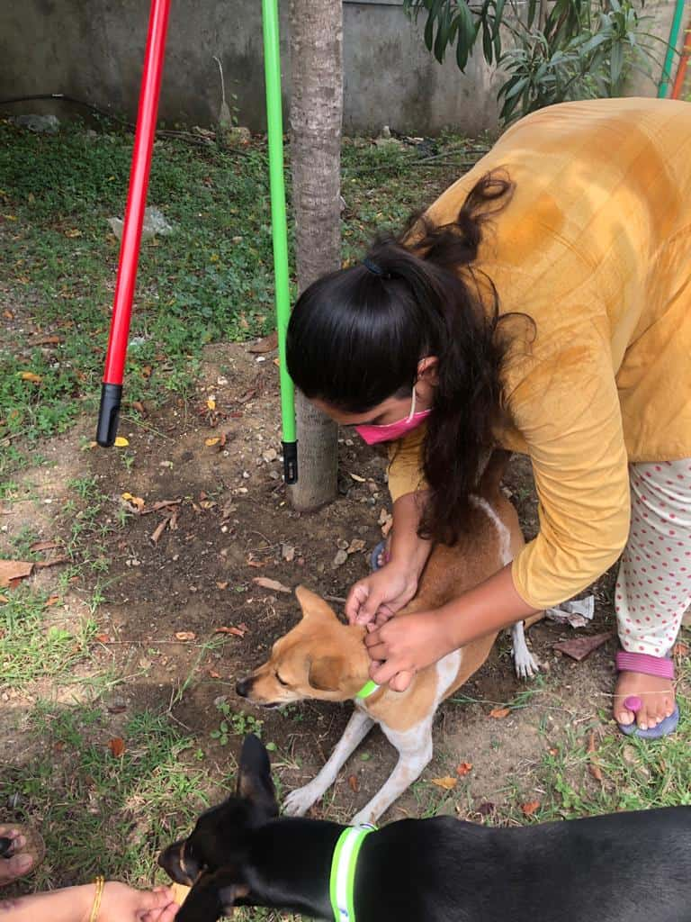 caring for stray dogs chennai