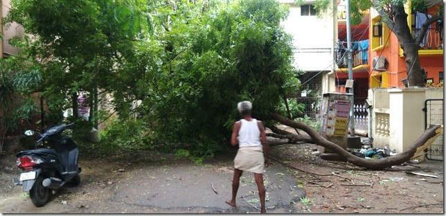 chennai tree fall